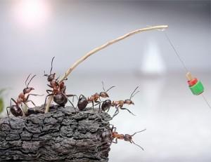 formiche-a-pesca